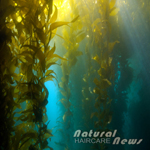Nutrition Spotlight: The Benefits of Kelp on Hair