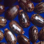 Castor Oil – A Miracle Elixir For Natural Hair